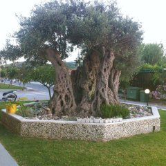 Mediterranean Hotel Apartments & Studios фото 2