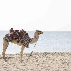 Отель Sealine Beach - a Murwab Resort Катар, Месайед - отзывы, цены и фото номеров - забронировать отель Sealine Beach - a Murwab Resort онлайн пляж фото 2