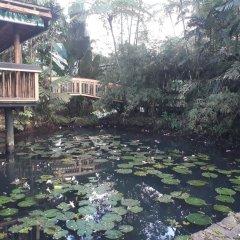 Отель Colo-I-Suva Rainforest Eco Resort Вити-Леву фото 8