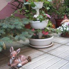 Отель Guest House Orchidea Поморие с домашними животными