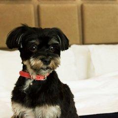 Отель SoHo Metropolitan Hotel Канада, Торонто - отзывы, цены и фото номеров - забронировать отель SoHo Metropolitan Hotel онлайн с домашними животными
