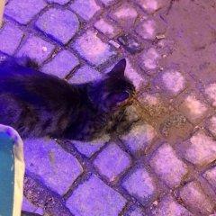 Отель Imerek Tas Ev Otel Чешме с домашними животными