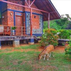 Отель Saji-Sami Шри-Ланка, Анурадхапура - отзывы, цены и фото номеров - забронировать отель Saji-Sami онлайн фото 15