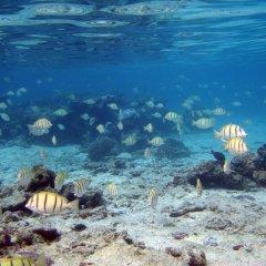 Отель Tahiti Sail and Dive Французская Полинезия, Бора-Бора - отзывы, цены и фото номеров - забронировать отель Tahiti Sail and Dive онлайн пляж фото 2
