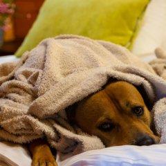 Petnehazy Club Hotel Superior с домашними животными