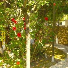 Отель Mirabelle Hotel Греция, Аргасио - отзывы, цены и фото номеров - забронировать отель Mirabelle Hotel онлайн фото 3
