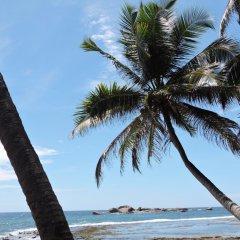 Отель Turtles Rest and Curry Bowl пляж фото 2