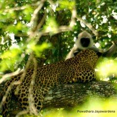 Отель Mahoora Tented Safari Camp All-Inclusive - Yala фото 3