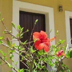 Отель Villa Medusa Греция, Херсониссос - отзывы, цены и фото номеров - забронировать отель Villa Medusa онлайн фото 21