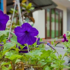 Гостевой Дом Petunia Garden Homestay фото 16