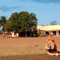 Отель Gorah Elephant Camp Южная Африка, Аддо - отзывы, цены и фото номеров - забронировать отель Gorah Elephant Camp онлайн пляж фото 2