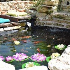 Отель Villa Rosa Dei Venti Болгария, Балчик - отзывы, цены и фото номеров - забронировать отель Villa Rosa Dei Venti онлайн фото 9