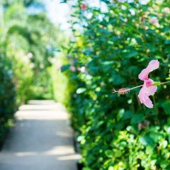 Отель All Seasons Naiharn Phuket Таиланд, Пхукет - - забронировать отель All Seasons Naiharn Phuket, цены и фото номеров фото 10