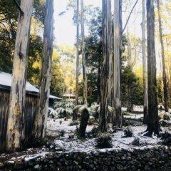 Отель Lemonthyme Wilderness Retreat фото 8