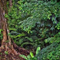 Отель Chachagua Rainforest Ecolodge фото 24