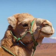Отель Casa Hassan Марокко, Мерзуга - отзывы, цены и фото номеров - забронировать отель Casa Hassan онлайн с домашними животными