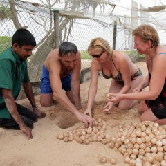 Отель Wunderbar Beach Club Hotel Шри-Ланка, Бентота - отзывы, цены и фото номеров - забронировать отель Wunderbar Beach Club Hotel онлайн приотельная территория