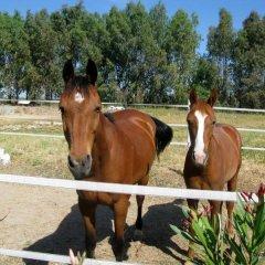 Отель Janas Country Resort Морес с домашними животными