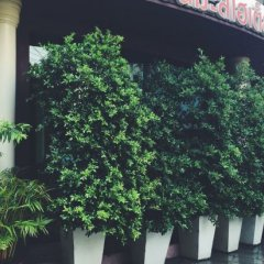 New Suanmali Hotel фото 2