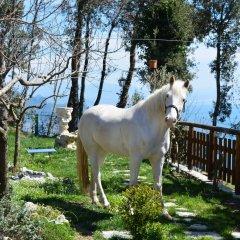 Отель B&B Miramare Италия, Аджерола - отзывы, цены и фото номеров - забронировать отель B&B Miramare онлайн парковка