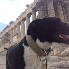 Отель Athens Backpackers Греция, Афины - отзывы, цены и фото номеров - забронировать отель Athens Backpackers онлайн парковка