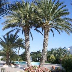 Отель Menzel Dija Appart-Hotel Тунис, Мидун - отзывы, цены и фото номеров - забронировать отель Menzel Dija Appart-Hotel онлайн фото 9
