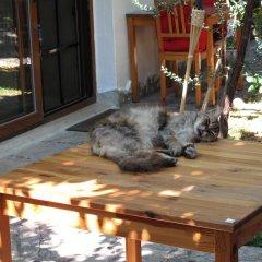 Iyon Pansiyon Турция, Фоча - отзывы, цены и фото номеров - забронировать отель Iyon Pansiyon онлайн с домашними животными