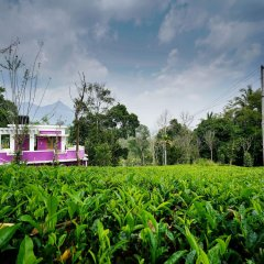 OYO 13548 Leaf Garden Cottage in Munnar, India from 39$, photos, reviews - zenhotels.com photo 4