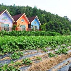 Отель Pyeongchang Sky Garden Pension Южная Корея, Пхёнчан - отзывы, цены и фото номеров - забронировать отель Pyeongchang Sky Garden Pension онлайн фото 13