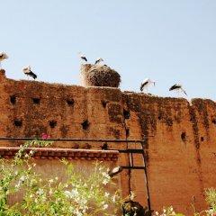 Отель Riad Carina Марокко, Марракеш - отзывы, цены и фото номеров - забронировать отель Riad Carina онлайн приотельная территория фото 2