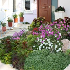 Отель Veggie Garden Athens B&B фото 2
