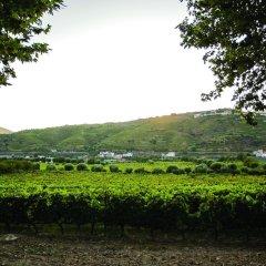 Отель The Wine House Hotel - Quinta da Pacheca Португалия, Ламего - отзывы, цены и фото номеров - забронировать отель The Wine House Hotel - Quinta da Pacheca онлайн фото 12