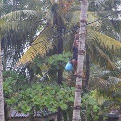 Отель FEEL Villa Шри-Ланка, Калутара - отзывы, цены и фото номеров - забронировать отель FEEL Villa онлайн