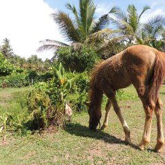 Отель Nisalavila Шри-Ланка, Берувела - отзывы, цены и фото номеров - забронировать отель Nisalavila онлайн с домашними животными