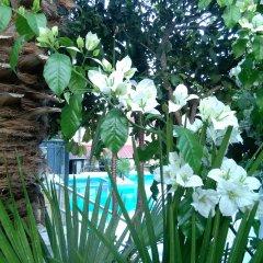 Отель Aragorn Paradise Garden Греция, Сивота - отзывы, цены и фото номеров - забронировать отель Aragorn Paradise Garden онлайн фото 3