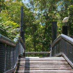 Отель Daintree Wild Zoo & Bed and Breakfast сауна
