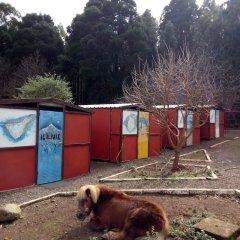 Campamento Quimpi Hostel Ла-Матанса-де-Асентехо с домашними животными