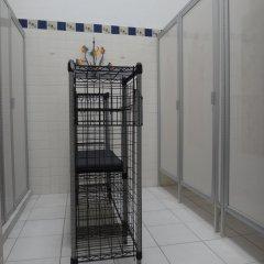 Отель Hostal de Maria Мексика, Гвадалахара - отзывы, цены и фото номеров - забронировать отель Hostal de Maria онлайн бассейн