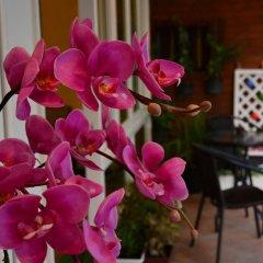 Отель Seedling House интерьер отеля