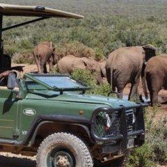 Отель Zuurberg Mountain Village Южная Африка, Аддо - отзывы, цены и фото номеров - забронировать отель Zuurberg Mountain Village онлайн городской автобус