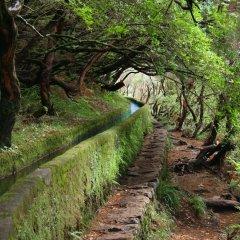 Отель Madeira Regency Cliff Португалия, Фуншал - отзывы, цены и фото номеров - забронировать отель Madeira Regency Cliff онлайн приотельная территория