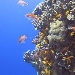 Отель Red Sea Dive Center фото 9