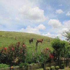 Отель Kauri Lodge Farmstay фото 2