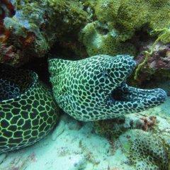Отель Red Sea Dive Center фото 6