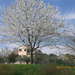 Отель I Ciliegi Озимо фото 25