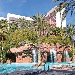 Отель Flamingo Las Vegas - Hotel & Casino США, Лас-Вегас - 11 отзывов об отеле, цены и фото номеров - забронировать отель Flamingo Las Vegas - Hotel & Casino онлайн бассейн фото 2