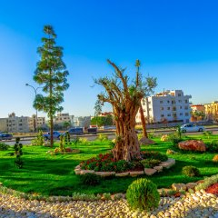 Olive Tree Hotel Amman спа фото 2