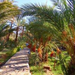 Отель Riad Tagmadart Ferme D'hôte Марокко, Загора - отзывы, цены и фото номеров - забронировать отель Riad Tagmadart Ferme D'hôte онлайн фото 21