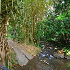 Отель Chachagua Rainforest Ecolodge фото 4