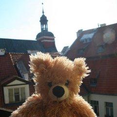 Отель Teddy Bear Hostel Riga Латвия, Рига - - забронировать отель Teddy Bear Hostel Riga, цены и фото номеров